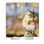 Red Squirrel Shower Curtain by Elena Elisseeva