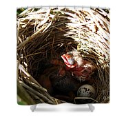 Red-winged Blackbird Babies And Egg Shower Curtain by J McCombie