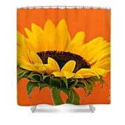Sunflower Closeup Shower Curtain by Elena Elisseeva
