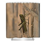 The Visitor Shower Curtain by Kim Henderson