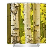 Three Autumn Aspens Shower Curtain by James BO  Insogna