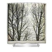 Winter Trees Shower Curtain by Silvia Ganora