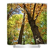 Fall Forest Shower Curtain by Elena Elisseeva