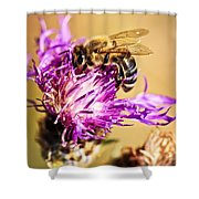 Honey Bee  Shower Curtain by Elena Elisseeva