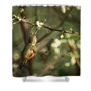 Hummingbird Shower Curtain by Ernie Echols