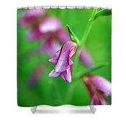 Pink Flowers Of Gladiolus Communis Shower Curtain by Frank Tschakert