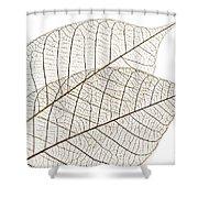 Skeleton leaves Shower Curtain by Elena Elisseeva
