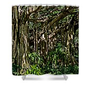 20120915-dsc09877 Shower Curtain by Christopher Holmes