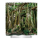 20120915-dsc09882 Shower Curtain by Christopher Holmes