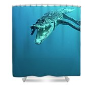 Saltwater Crocodile Crocodylus Porosus Shower Curtain by Mike Parry
