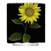 Sunflower Shower Curtain by Deddeda