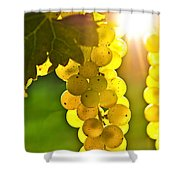 Yellow Grapes Shower Curtain by Elena Elisseeva