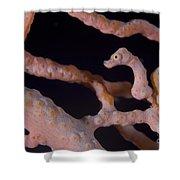 Pygmy Seahorse On Sea Fan, Papua New Shower Curtain by Steve Jones