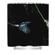 Madagascar Paradise Flycatcher Shower Curtain by Cyril Ruoso