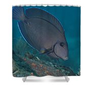 A Blue Tang Surgeonfish, Key Largo Shower Curtain by Terry Moore