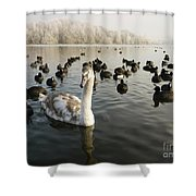 A Cygnets First Winter Shower Curtain by John Chatterley