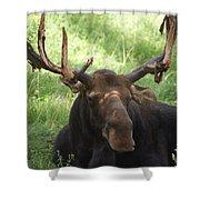 A Moose Shower Curtain by Ernie Echols