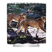 A Pair of Cheetah's Shower Curtain by Bill Cannon