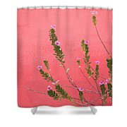 A Pink Flowering Plant Growing Beside A Shower Curtain by Stuart Westmorland