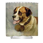 A Portrait of a St. Bernard Shower Curtain by James E Bourhill