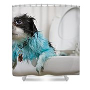 A Puppys Mistake Shower Curtain by Mike Raabe