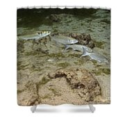 A Small School Of Grey Mullet Swim Shower Curtain by Terry Moore