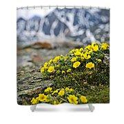 Alpine Meadow  Shower Curtain by Elena Elisseeva