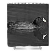American Coot Shower Curtain by Bob and Nadine Johnston