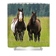 American Paint Stallion And Mare Shower Curtain by Karon Melillo DeVega