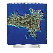 Amoeba Proteus Lm Shower Curtain by Eric V. Grave