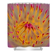 An Inner Glow Shower Curtain by Kerri Ligatich