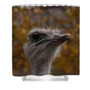 Annoyed Bird Shower Curtain by Trish Tritz