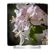 Apple Blossom Shower Curtain by Ralf Kaiser