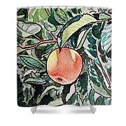 Apple Tree Sketchbook Project Down My Street Shower Curtain by Irina Sztukowski