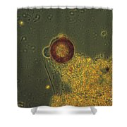 Arcella Lm Shower Curtain by Eric V. Grave