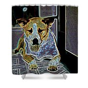 Australian Cattle Dog Boxer Mix Shower Curtain by One Rude Dawg Orcutt