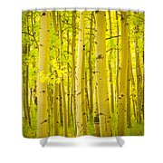 Autumn Aspens Vertical Image  Shower Curtain by James BO  Insogna