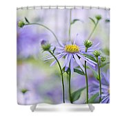 Autumn Asters Shower Curtain by Jacky Parker