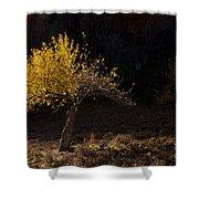 Autumn Light Shower Curtain by Mike  Dawson