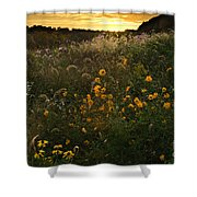 Autumn Wildflower Sunset - D007757 Shower Curtain by Daniel Dempster