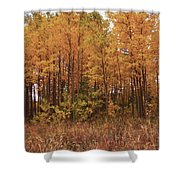 Awesome Aspens Shower Curtain by Carol Cavalaris
