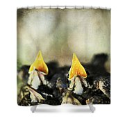 Baby Birds Shower Curtain by Darren Fisher