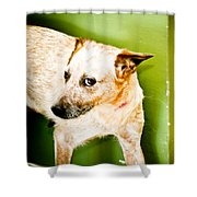Back Off  Shower Curtain by Toni Hopper
