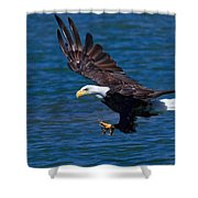 Bald Eagle On The Hunt Shower Curtain by Beth Sargent