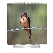 Barn Swallow - Looking Good Shower Curtain by Travis Truelove