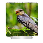 Barn Swallow In Sunlight Shower Curtain by Robert Frederick