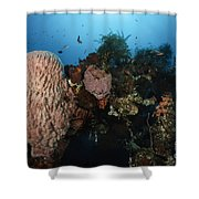 Barrel Sponge On Liberty Wreck, Bali Shower Curtain by Todd Winner