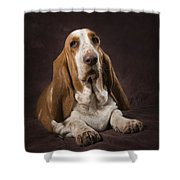 Basset Hound On A Brown Muslin Backdrop Shower Curtain by Corey Hochachka