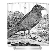 BEWICK: RAVEN Shower Curtain by Granger