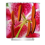 Big Lily Flower Art Prints Pink Lilies Floral Shower Curtain by Baslee Troutman